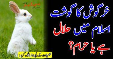خرگوش کا گوشت اسلام میں حلال ہے یا حرام؟