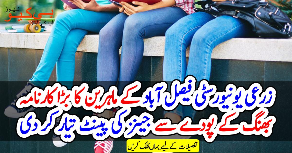 زرعی یونیورسٹی فیصل آباد کے ماہرین کا بڑا کارنامہ، بھنگ کے پودے سے جینز کی پینٹ تیار کر دی