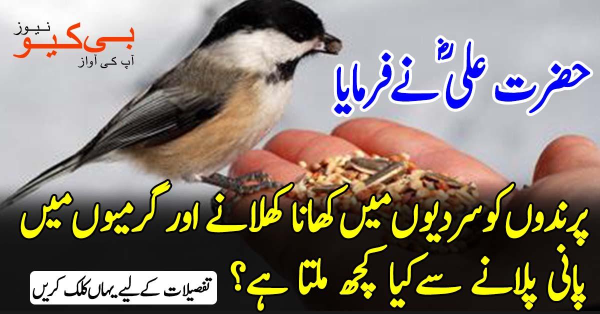 حضرت علی ؓنےفرمایا کہ پرندوں کوسردیوں میں کھانا کھلانے اورگرمیوں میں پانی پلانے سےکیا کچھ ملتا ہے؟