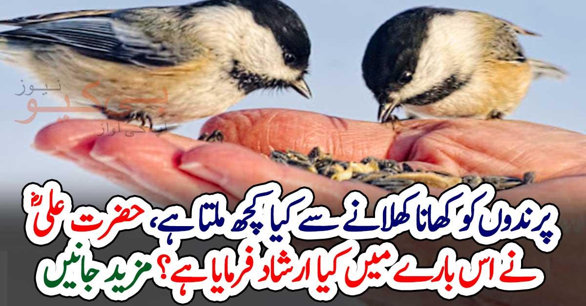 پرندوں کو کھانا کھلانے سے کیا کچھ ملتا ہے، حضرت علیؓ نے اس بارے میں کیا ارشاد فرمایا ہے؟